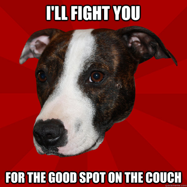 I'll fight you for the good spot on the couch  Vicious Pitbull Meme