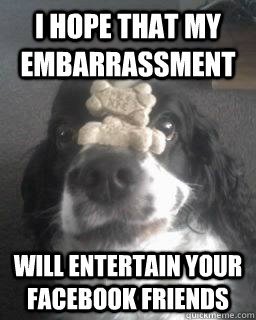 I hope that my embarrassment Will entertain your Facebook friends  No Self-esteem Excellently Trained Cockerspaniel