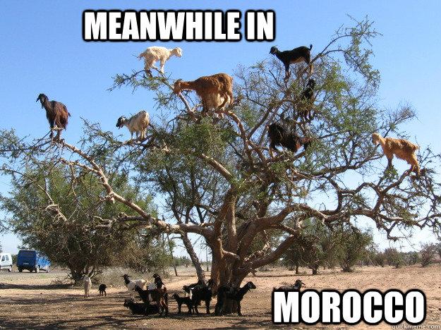 Meanwhile in Morocco - Meanwhile in Morocco  Misc