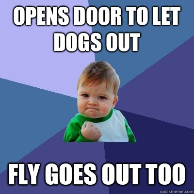 Opens door to let dogs out Fly goes out too - Opens door to let dogs out Fly goes out too  Success Kid
