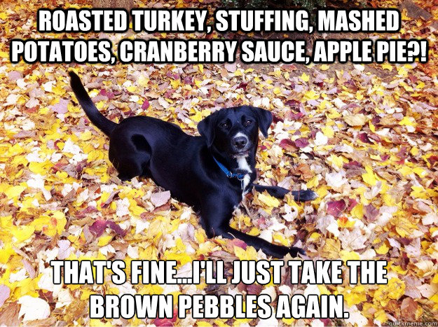 Roasted Turkey, stuffing, Mashed potatoes, cranberry sauce, apple pie?! That's fine...i'll just take the brown pebbles again. - Roasted Turkey, stuffing, Mashed potatoes, cranberry sauce, apple pie?! That's fine...i'll just take the brown pebbles again.  Guilt Giving Good Dog