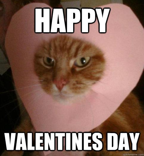 Happy Valentines Day  Valentine Cat