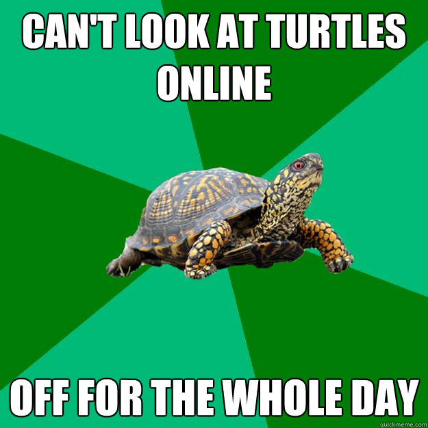 Can't look at turtles online off for the whole day - Can't look at turtles online off for the whole day  Torrenting Turtle