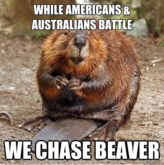 while Americans & Australians battle we chase beaver