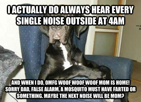 I ACTUALLY DO ALWAYS HEAR EVERY SINGLE NOISE OUTSIDE AT 4AM AND WHEN I DO, OMFG WOOF WOOF WOOF MOM IS HOME!  SORRY DAD, FALSE ALARM, A MOSQUITO MUST HAVE FARTED OR SOMETHING. MAYBE THE NEXT NOISE WILL BE MOM? - I ACTUALLY DO ALWAYS HEAR EVERY SINGLE NOISE OUTSIDE AT 4AM AND WHEN I DO, OMFG WOOF WOOF WOOF MOM IS HOME!  SORRY DAD, FALSE ALARM, A MOSQUITO MUST HAVE FARTED OR SOMETHING. MAYBE THE NEXT NOISE WILL BE MOM?  The Most Interesting Dog in the World