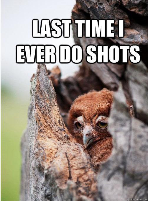 hangover owl memes | quickmeme