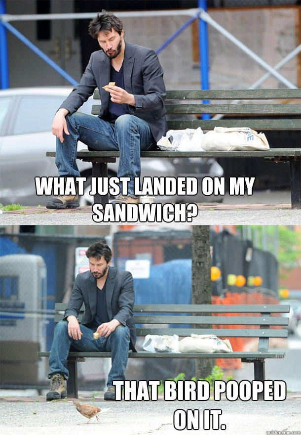 What just landed on my sandwich? That bird pooped on it. - What just landed on my sandwich? That bird pooped on it.  Sad Keanu
