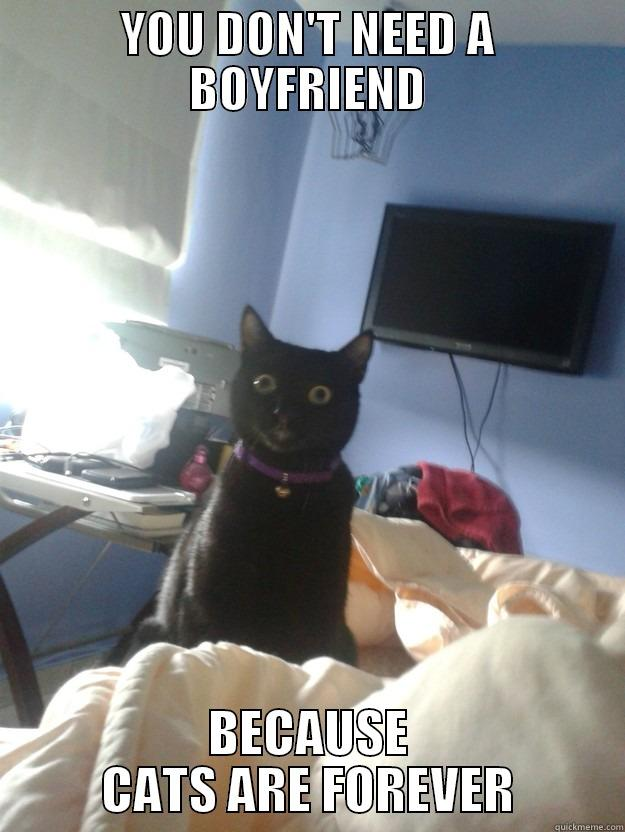 YOU DON'T NEED A BOYFRIEND BECAUSE CATS ARE FOREVER overly attached cat