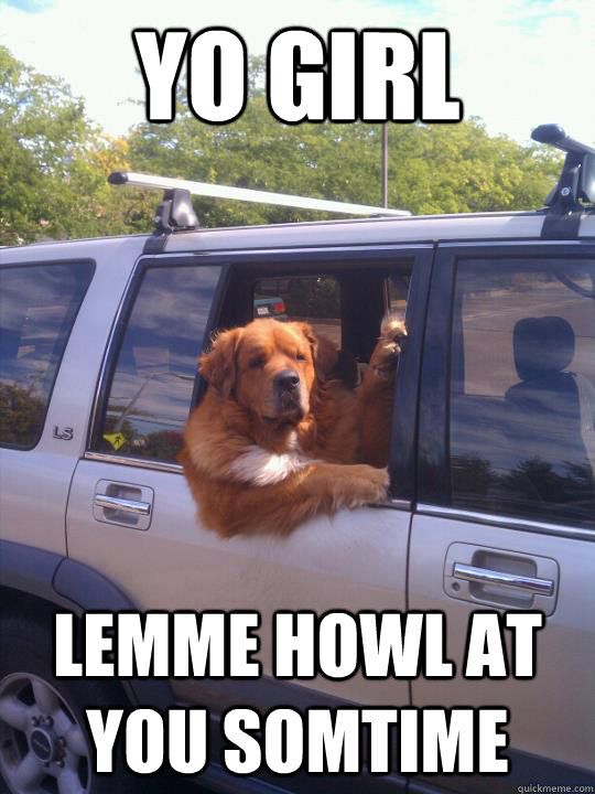 2a8e0a4fa7493f0e143c4998790129272b45834b6662280052cad6dc237673d3 yo girl lemme howl at you somtime gangster dog quickmeme