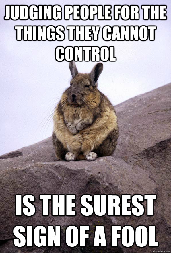 Judging people for the things they cannot control is the surest sign of a fool - Judging people for the things they cannot control is the surest sign of a fool  Wise Wondering Viscacha