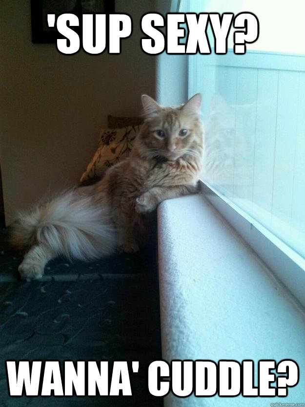 2b1288e900dce60b1028552d602cf23c98afcb17c9a7b9d72abbd9b59a3867e3 sup sexy? wanna' cuddle? cool cat quickmeme,Sup Meme