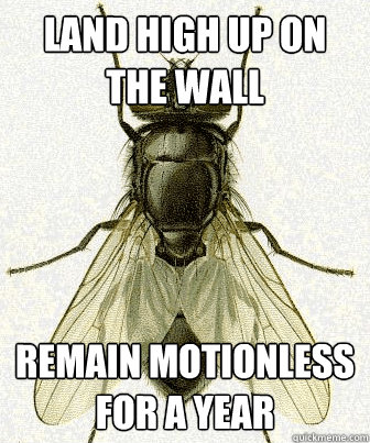 Land high up on the wall remain motionless for a year - Land high up on the wall remain motionless for a year  Fly logic