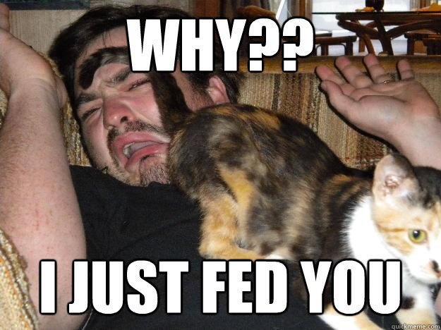 why?? I JUST fed you - why?? I JUST fed you  Cats are jerks