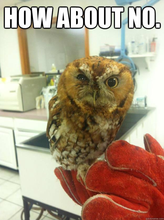 Judgemental Owl memes | quickmeme