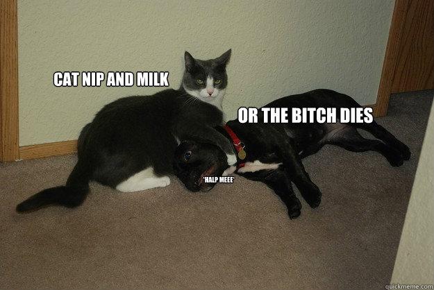 Cat Nip and milk or the bitch dies *halp meee*