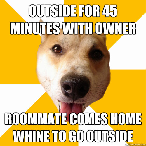 outside for 45 minutes with owner roommate comes home whine to go outside  Territorial Shiba Inu