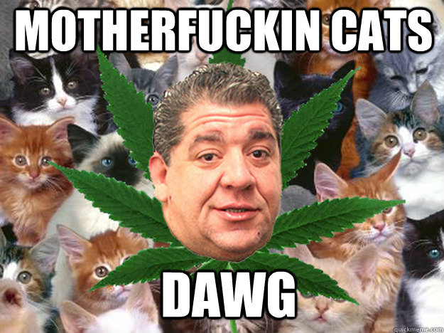 2bf31a9d0b7ef0b43708909f62c6e50a17fe8c20e3a7791e8b32ad3c595d97a7 motherfuckin cats dawg joey catnip diaz quickmeme
