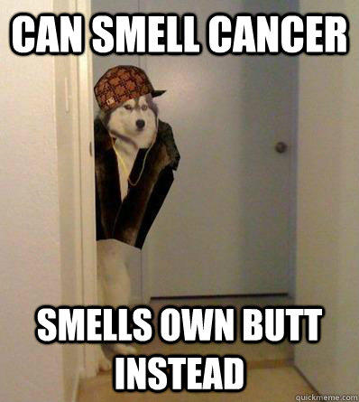 CAN SMELL CANCER SMELLS OWN BUTT INSTEAD  Scumbag dog