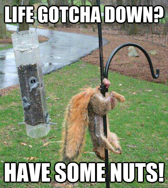 Life gotcha down? have some nuts!