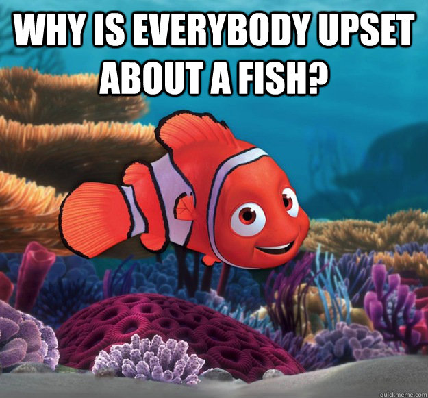 Why is everybody upset about a fish?  - Why is everybody upset about a fish?   nemo