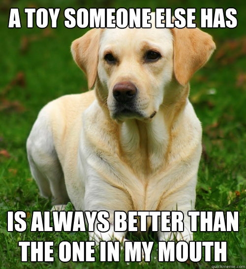 a toy someone else has is always better than the one in my mouth - a toy someone else has is always better than the one in my mouth  Dog Logic