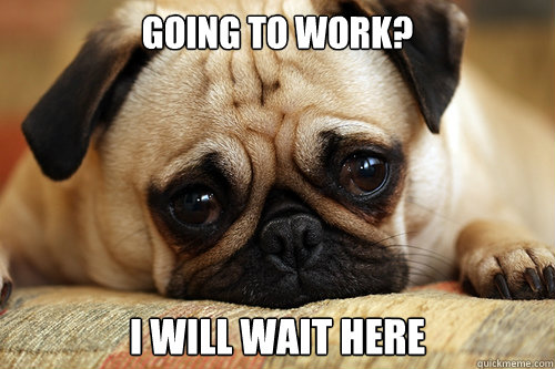 Going to work? I will wait here  sad pug