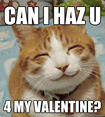 can i haz u 4 my valentine?  Valentine Cat