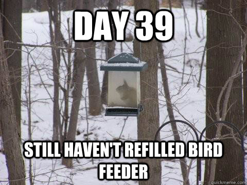 Day 39 still haven't refilled bird feeder  - Day 39 still haven't refilled bird feeder   Misc