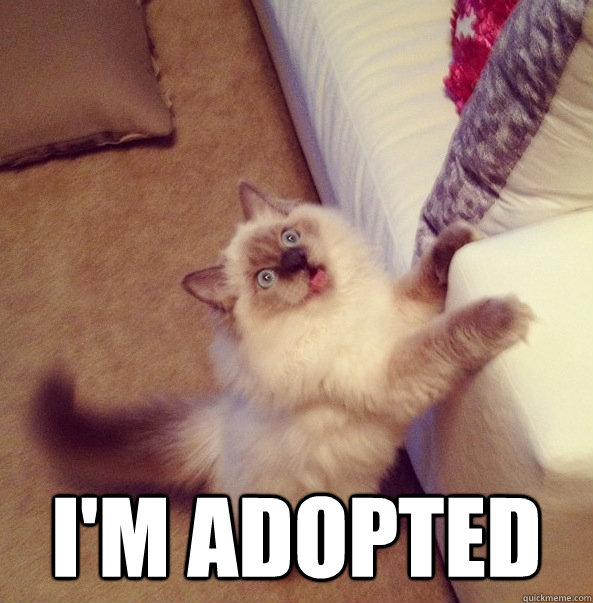 I'm adopted -  I'm adopted  Misc