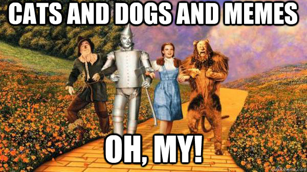 Cats and dogs and memes oh, my! - Cats and dogs and memes oh, my!  Walking in Oz