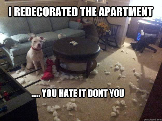 I redecorated the apartment ..... you hate it dont you  Grumpy Dog