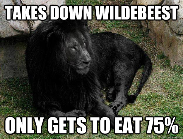takes down wildebeest only gets to eat 75%