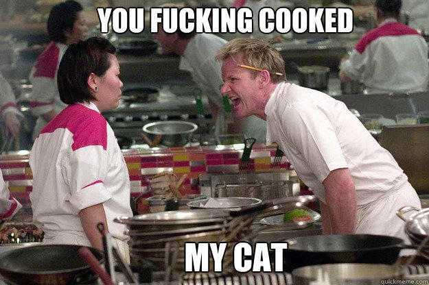 MY CAT  YOU FUCKING COOKED