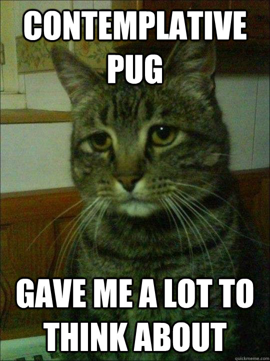 contemplative pug gave me a lot to think about - contemplative pug gave me a lot to think about  Depressed cat