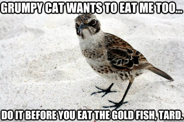 Grumpy Cat wants to eat me too... do it before you eat the gold fish, tard.
