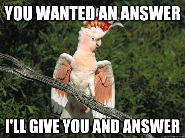 You Wanted An Answer I'll Give You and answer - You Wanted An Answer I'll Give You and answer  Angry Cockatoo