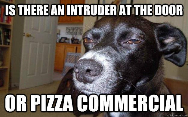 Is there an intruder at the door or pizza commercial   Skeptical Mutt