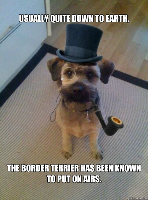 Usually quite down to earth, the Border Terrier has been known to put on airs.