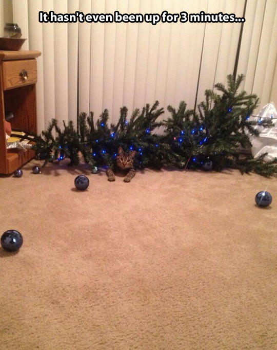 Just Put Up My Christmas Tree, This Was My Cat's Reaction... -   Misc