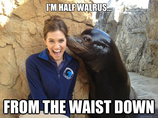 I'm half walrus... From the waist down