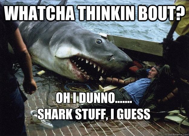 whatcha thinkin bout oh i dunno shark stuff i