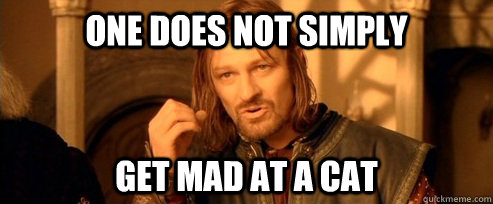 One does not simply Get mad at a cat - One does not simply Get mad at a cat  One Does Not Simply
