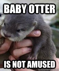 Baby otter Is not amused - Baby otter Is not amused  Angry baby otter