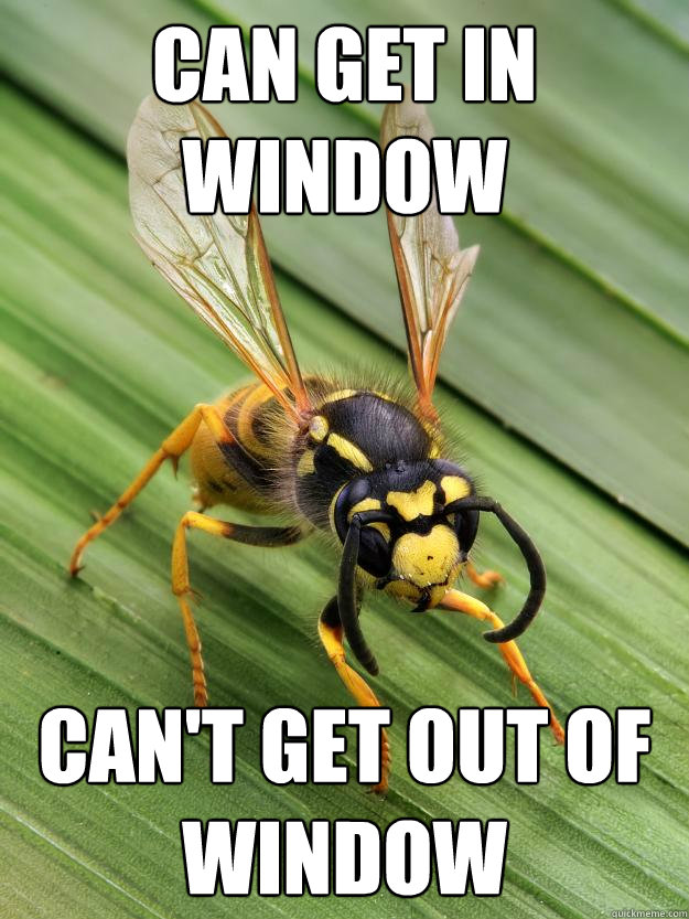 Can get in window Can't get out of window  Scumbag Wasp
