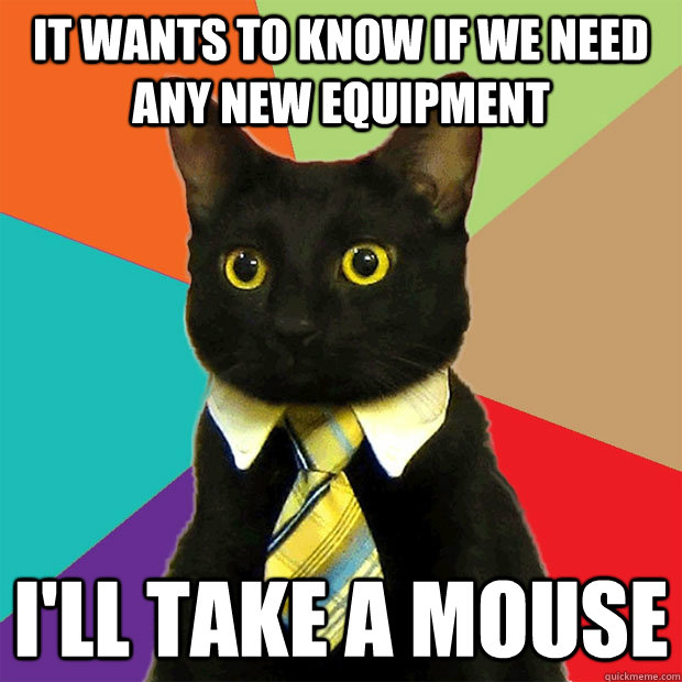IT wants to know if we need any new equipment I'll take a mouse - IT wants to know if we need any new equipment I'll take a mouse  Business Cat