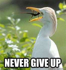 3010ad663c16975d24098ab02fa0dfed295a10f2b07fa461d6a97c11b22ad730 never give up never give up quickmeme