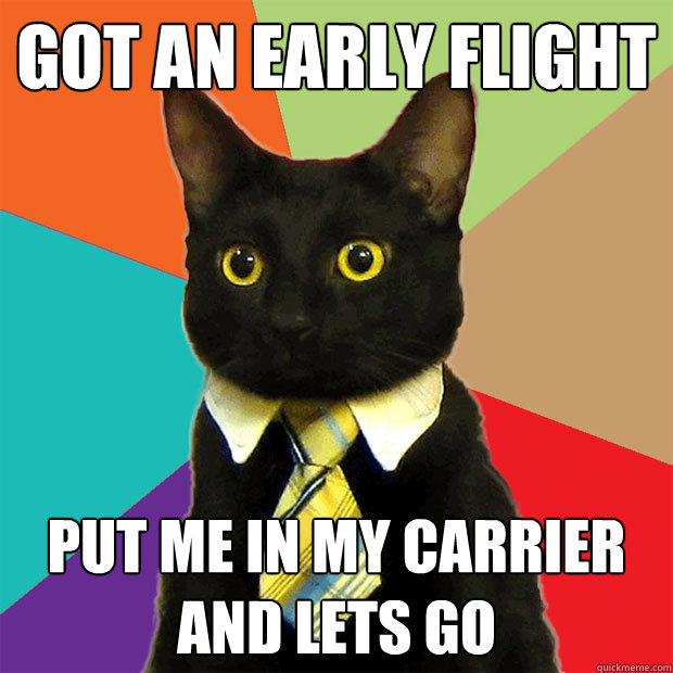 got an early flight put me in my carrier and lets go - got an early flight put me in my carrier and lets go  Business Cat
