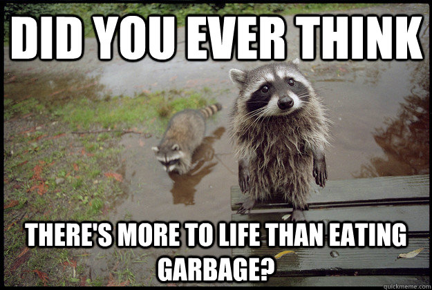 did you ever think there's more to life than eating garbage? - did you ever think there's more to life than eating garbage?  Reality Raccoon
