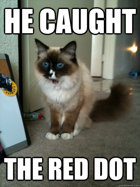 he caught the red dot - he caught the red dot  Amazed Cat