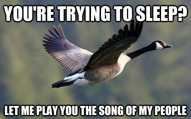 You're trying to sleep? Let me play you the song of my people - You're trying to sleep? Let me play you the song of my people  Scumbag Goose